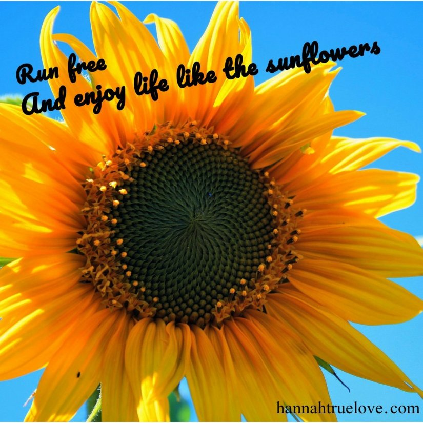 Run free and enjoy life like the sunflowers.